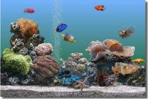 Captura SereneScreen Marine Aquarium